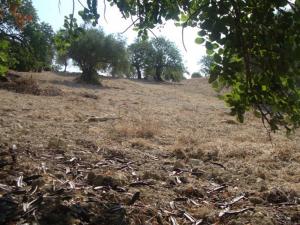 Carrube Bio Società Agricola Bonfanti