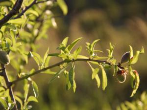Almonds Noto Sicily Bonfanti