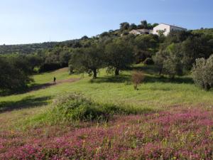 Olives in a Bio Farm Sicily